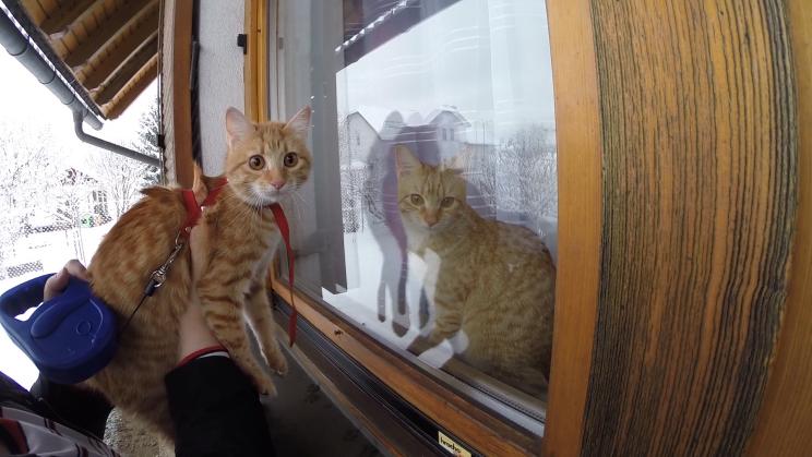 Foto: Nala und Daisy vor und hinter dem Fenster
