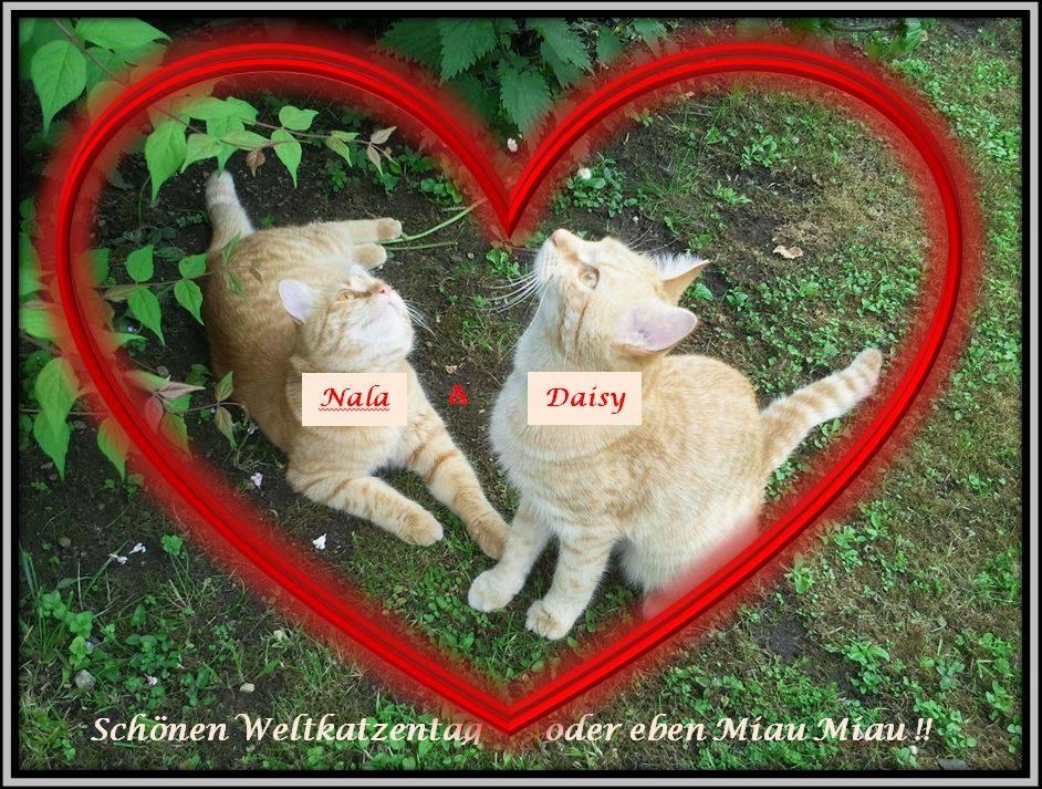 Alles Gute zum Weltkatzentag